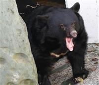 【七十二候】熊蟄穴 12月12~16日