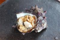 【料理と酒】江ノ島丼 サザエとシラスたっぷり