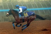 アーモンドアイは(5)枠9番 競馬の有馬記念枠順決まる