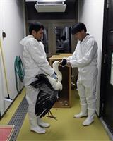豊岡でコウノトリ繁殖目指す 横浜から幼鳥1羽借り受け