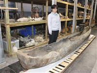 丸木舟、古里の奄美へ愛媛に90年以上前漂着か