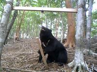 ドングリ凶作の年はツキノワグマに注意 奈良県森林技術センター