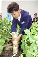 なにわの伝統野菜「田辺大根」小学校で収穫祭