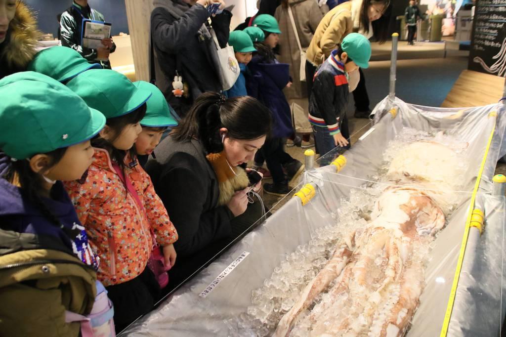 京都水族館で展示されているダイオウイカ=21日、京都市下京区の京都水族館(桑村大撮影)