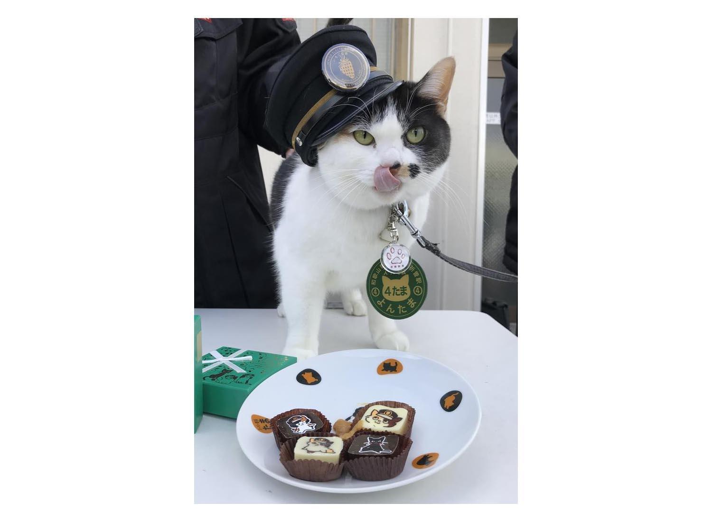 チョコレートをPRするスーパー駅長「よんたま」=和歌山市の伊太祈曽駅