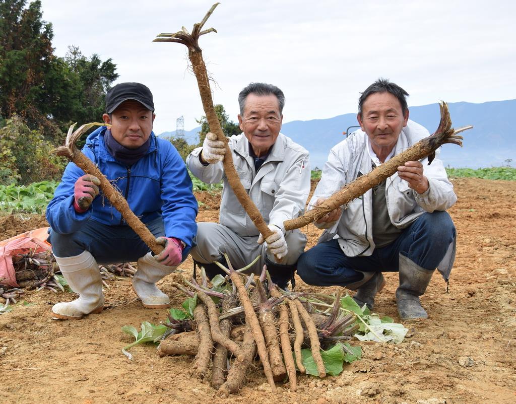 収穫した「はたごんぼ」を手にする岡本進組合長(中央)ら=和歌山県橋本市