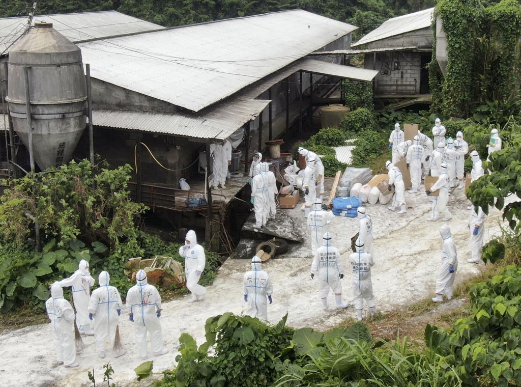 飼育豚が豚コレラに感染した沖縄県うるま市の養豚場で、防疫作業をする県職員と自衛隊員ら=8日午後0時1分(小型無人機から)