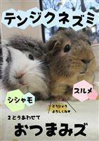 京都市長選に負けないぞ 動物たちの「園長選」が熱い 京都市動物園