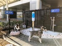 伊丹空港に犬専用トイレ、屋外に 国内初