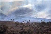 豪州、森林火災の制圧宣言 最悪被害州の消防当局