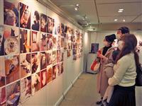 約400点の猫写真など「にゃんぱく~ねこの万博~in大丸梅田店」が開幕