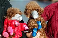 「エアロゾル感染」可能性認める 中国政府 新型肺炎 「飛沫」より感染力