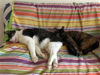 猫の殺処分ゼロ「千代田モデル」に注目 保護から飼い主探しまで