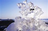 氷の「宝石」海岸覆う 北海道豊頃町