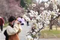 茨城県庁がテレワーク、梅まつりはイベント中止 新型肺炎で