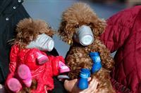 香港 感染者のペットの犬に弱陽性反応