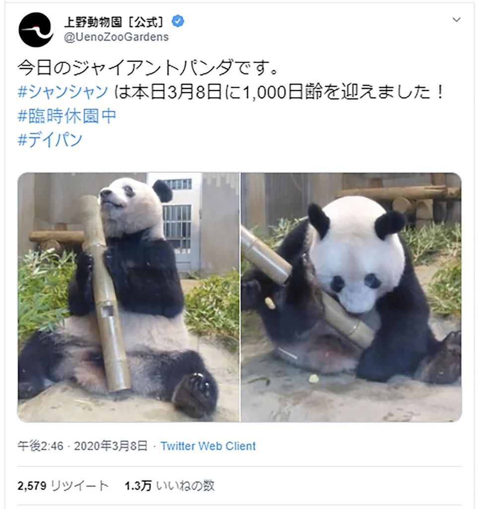 毎日 パンダ ツイッター