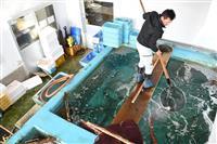春のグルメ「淡路島 サクラマス」 餌はタマネギ