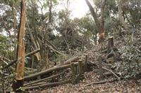 熊本の国史跡古墳で樹木切られる チェーンソー使用か