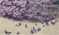 新宿御苑の桜、咲き始め