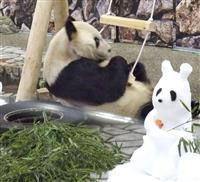 アドベンチャーワールド、パンダ観覧など23日から一部再開
