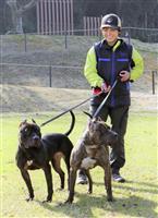 「危険」?実は頼もしい犬、ピットブル「嘱託警察犬」で活躍 熊本県警
