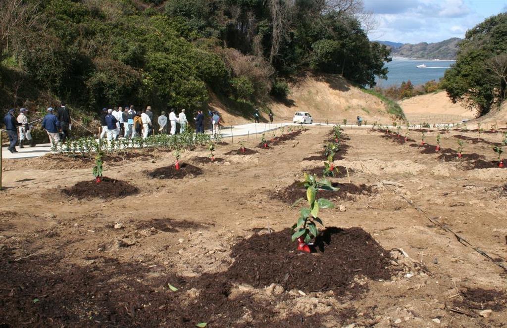 西日本豪雨災害から復旧、松山市の柑橘園地