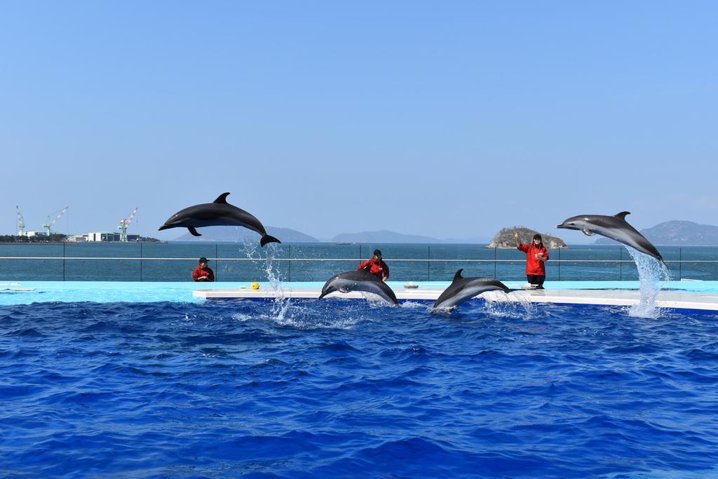 四国水族館を報道に公開 新型コロナで開業延期