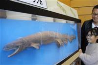 シン・ゴジラのモデル 謎の深海ザメ「ラブカ」の威力