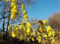 咲きほころぶ春満喫「大阪散策」の勧め