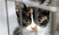 動物虐待摘発、初の百件超 改正法6月施行、厳罰化