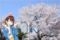 【茨ひよりのいばらき日和】「梅だけじゃない!! 桜の名所めぐり」