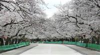 花見の名所を突然規制 東京都、全面自粛を要請