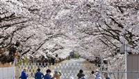 桜のトンネル、来春はもっと先へ 福島・富岡町