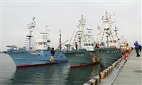 三陸沿岸で32年ぶり商業捕鯨 宮城・石巻から3隻出港