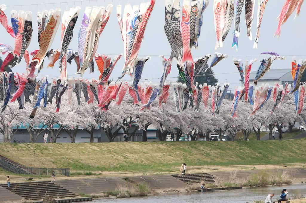 """新型コロナで少し寂しく… 福島・須賀川で桜とこいのぼり""""競演…"""