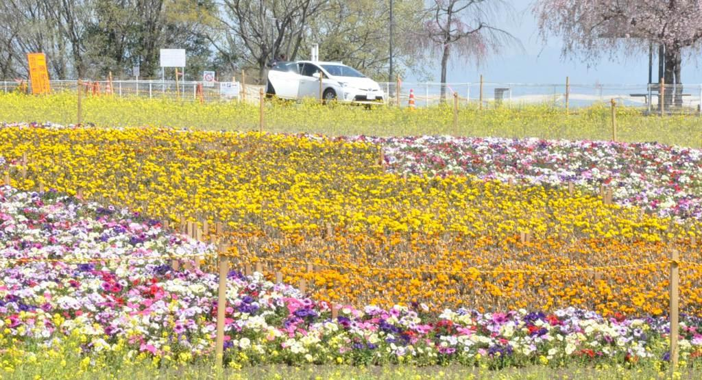 群馬・藤岡市の「花と緑のぐんまづくり」ほぼ全てのイベント中止