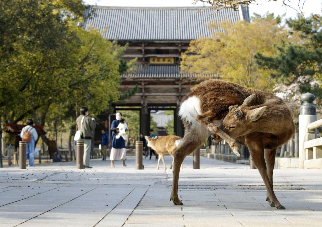 奈良県で新たに4人感染 県内計34人に