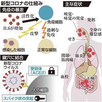 免疫暴走で肺炎重篤化か 新型コロナ、全身臓器に侵入 研究で判明
