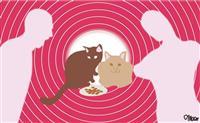 【川村妙慶の人生相談】かわいそうな野良猫に餌 悪いこと?