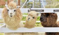 【動画】ずっと、いっしょだね 静かな動物園で暮らす親子たち