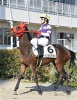 【いきもの語り】バジガクモミジの挑戦(上) 日本一小さな競走馬