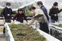 大分大山町農協が高齢者雇用農場 6次産業化促進で若者に継承へ