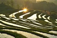【動画】鴨川市・大山千枚田 秋の収穫はみんなで…祈る日々