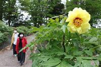 花の盛りは過ぎたけど…屋外満喫 福島「須賀川牡丹園」再開