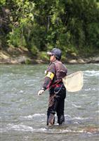 相模川でアユ試し釣り 放流遅れで釣果伸びず