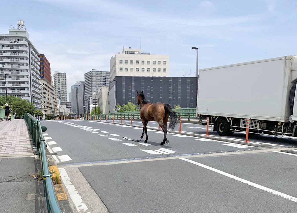 大井競馬場から馬脱走、車と衝突