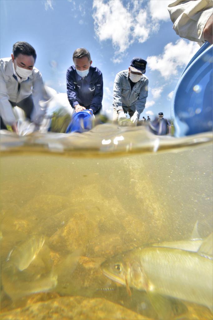 福島・木戸川でアユ放流 来年の遊漁再開向け準備