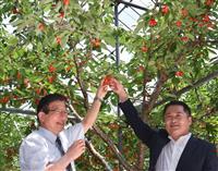山梨・静岡県、感染対策の上で交流強化 両知事がサクランボ農園で会談