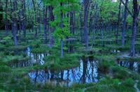 【動画】人と自然、共生願う「水庭」 栃木県那須町